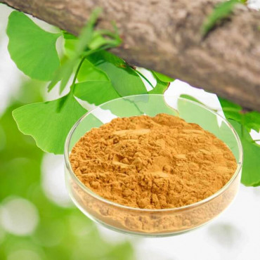 ginkgo biloba powder herbs medicinal plant extract herbal medicine health food supplements
