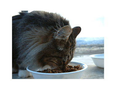 Feed additives enzymes for animal