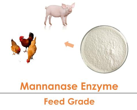 beta Mannanase Enzyme Powder Poultry Feed Grade